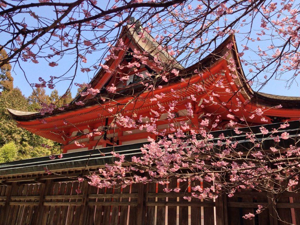 Organiser son voyage au Japon : mes conseils