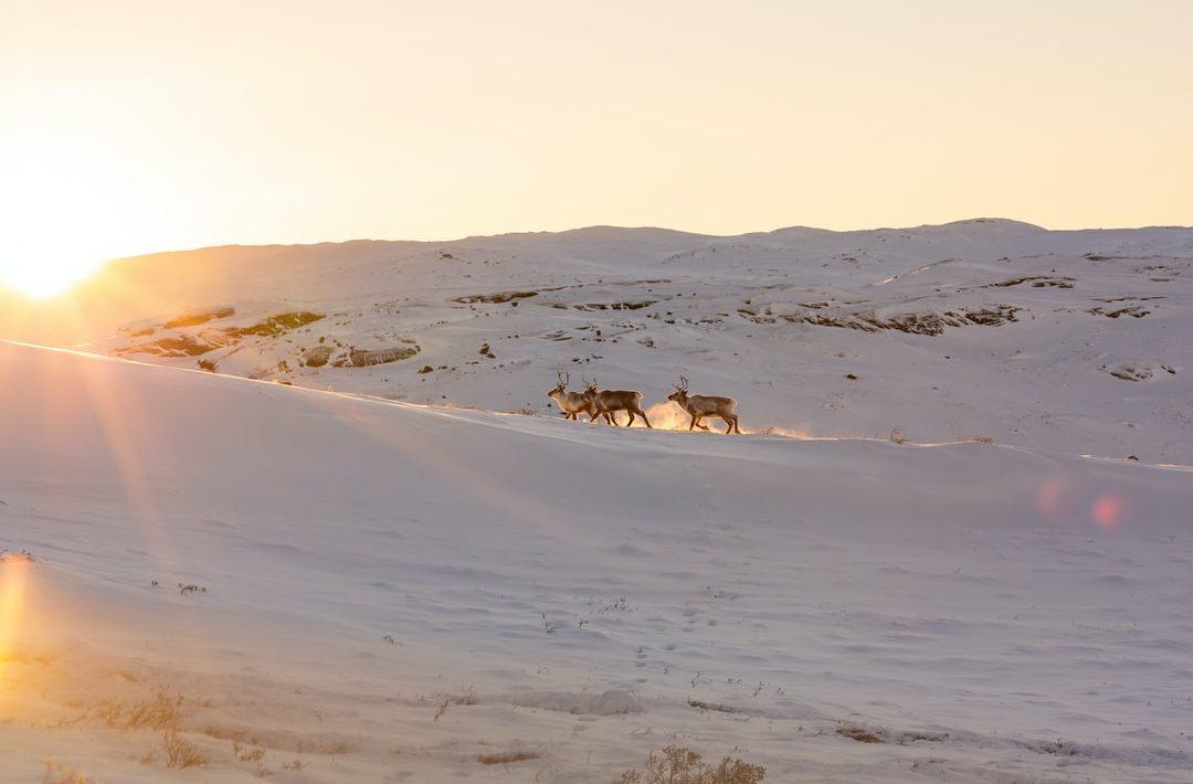 kangerlussuaq groenland